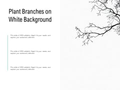 Plant Branches On White Background Ppt PowerPoint Presentation Portfolio Graphics Pictures