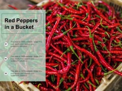 Red Peppers In A Bucket Ppt PowerPoint Presentation Gallery Maker