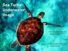 Sea Turtle Underwater Image Ppt PowerPoint Presentation Outline Picture PDF