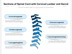 Sections Of Spinal Cord With Cervical Lumber And Sacral Ppt PowerPoint Presentation Icon Diagrams PDF