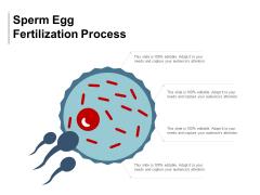 Sperm Egg Fertilization Process Ppt Powerpoint Presentation File Clipart