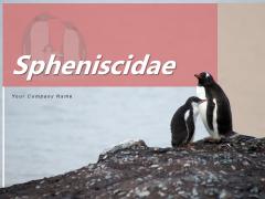 Spheniscidae Aquatic Animal Brown Penguin Ppt PowerPoint Presentation Complete Deck