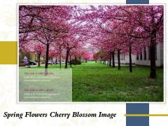 Spring Flowers Cherry Blossom Image Ppt PowerPoint Presentation Portfolio Templates PDF