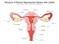 Structure Of Women Reproductive System With Labells Ppt PowerPoint Presentation File Model PDF