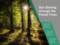 Sun Shining Through The Forest Trees Ppt PowerPoint Presentation Icon Visual Aids