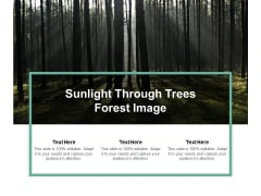 Sunlight Through Trees Forest Image Ppt PowerPoint Presentation Professional Good