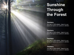 Sunshine Through The Forest Ppt Powerpoint Presentation Model Styles