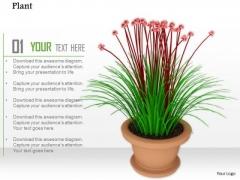 Stock Photo Beautiful Red Green Flower In Vase PowerPoint Slide