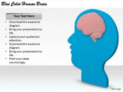 Stock Photo Business Policy And Strategy Blue Color Human Brain Clipart