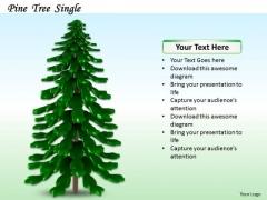 Stock Photo Illustration Of Pine Tree PowerPoint Slide