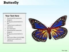 Stock Photo Image Of Beautiful Butterfly PowerPoint Slide