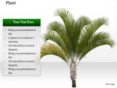 Stock Photo Image Of Palm Tree On Beach PowerPoint Slide