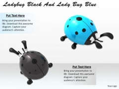 Stock Photo Lady Bug Black And Lady Bug Blue PowerPoint Slide