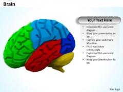 Stock Photo Multicolored Brain PowerPoint Slide