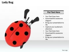 Stock Photo Red Lady Bug On White Background PowerPoint Slide