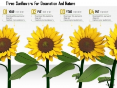 Stock Photo Three Sunflowers For Decoration And Nature PowerPoint Slide