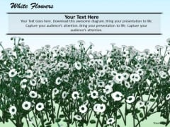 Stock Photo White Flowers Nature Background PowerPoint Slide