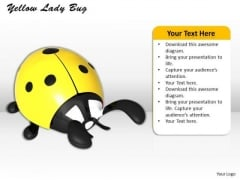 Stock Photo Yellow Lady Bug Insect PowerPoint Slide