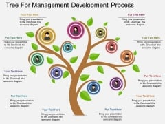 Tree For Management Development Process Powerpoint Template