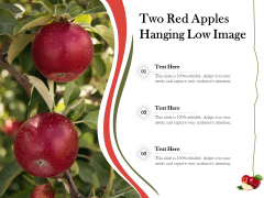 Two Red Apples Hanging Low Image Ppt PowerPoint Presentation Gallery Templates PDF