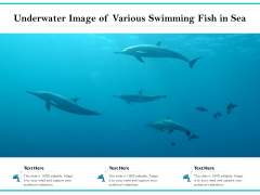 Underwater Image Of Various Swimming Fish In Sea Ppt PowerPoint Presentation Gallery Master Slide PDF