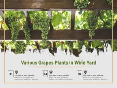 Various Grapes Plants In Wine Yard Ppt PowerPoint Presentation File Slides PDF