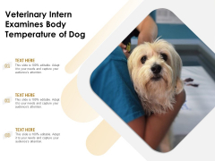 Veterinary Intern Examines Body Temperature Of Dog Ppt PowerPoint Presentation Inspiration Pictures PDF