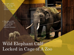 Wild Elephant Calf Locked In Cage Of A Zoo Ppt PowerPoint Presentation Model Slideshow PDF