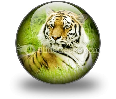 amur_tiger_powerpoint_icon_c