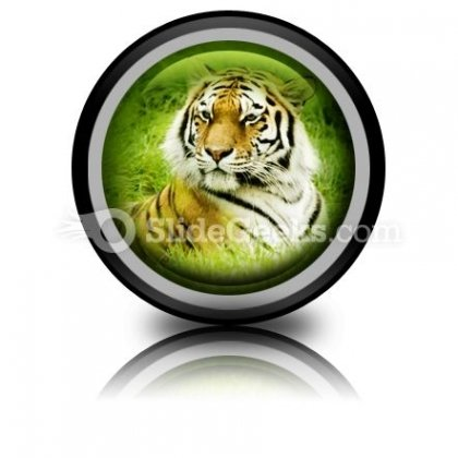 Amur Tiger PowerPoint Icon Cc