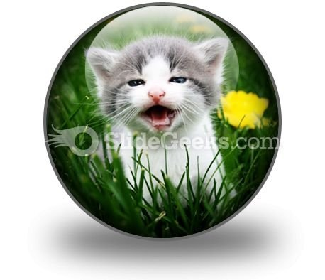 baby_cat_powerpoint_icon_c