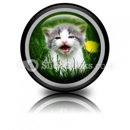 Baby Cat PowerPoint Icon Cc