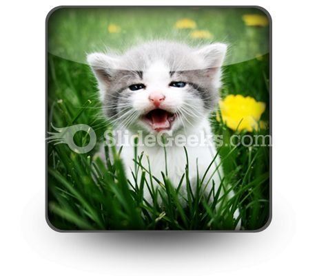 baby_cat_powerpoint_icon_s