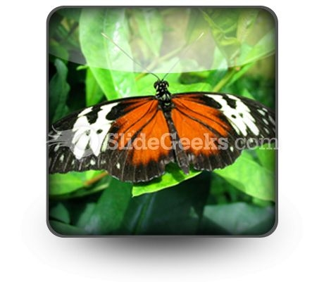 Big Butterfly PowerPoint Icon S