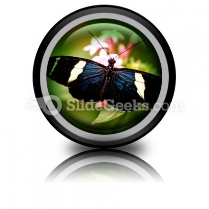 Beautiful Butterfly PowerPoint
