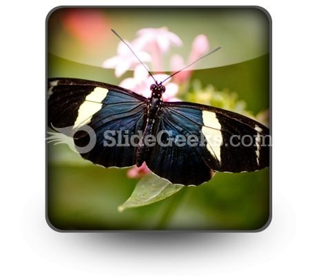 Colorful Butterfly PowerPoint Icon