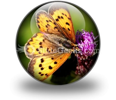 butterfly_powerpoint_icon_c