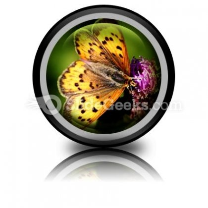 Butterfly PowerPoint Icon Cc