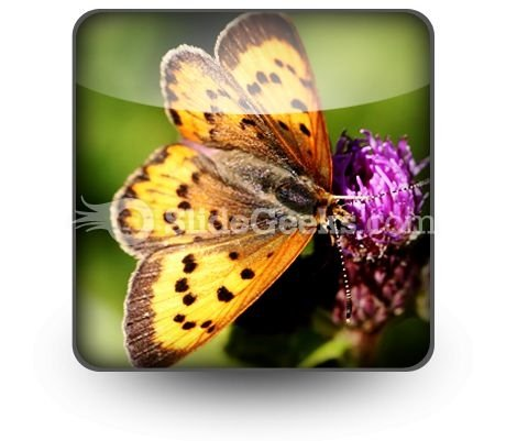 Butterfly PowerPoint Icon S