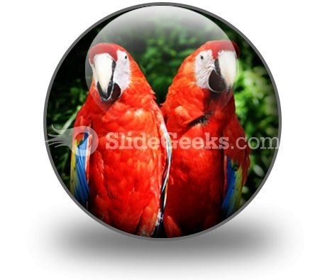Red Parrots PowerPoint Icon C