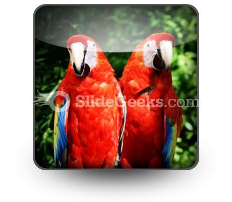 Red Parrots PowerPoint Icon S