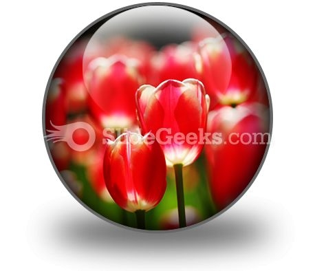 Red Tulips PowerPoint Icon C