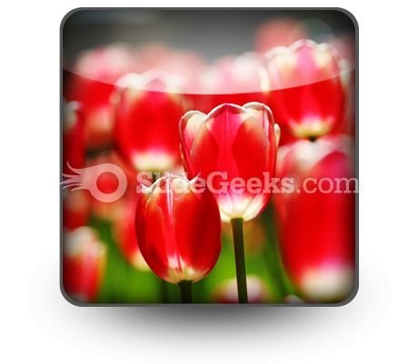 Red Tulips PowerPoint Icon S