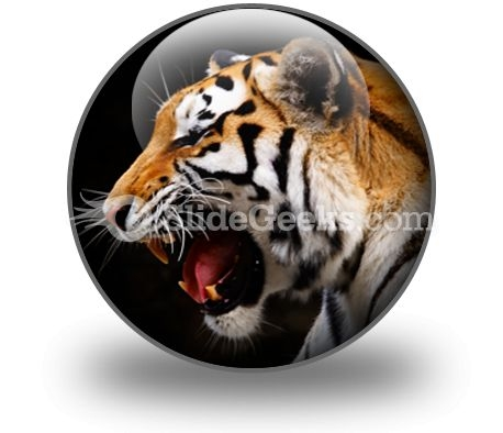 Tiger PowerPoint Icon C
