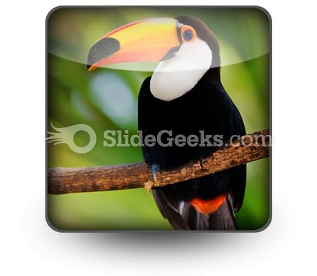 toucan_powerpoint_icon_s