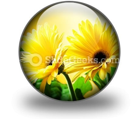 Yellow Daises PowerPoint Icon C