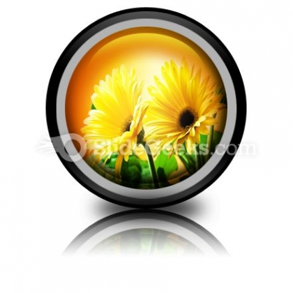 Yellow Daises PowerPoint Icon Cc