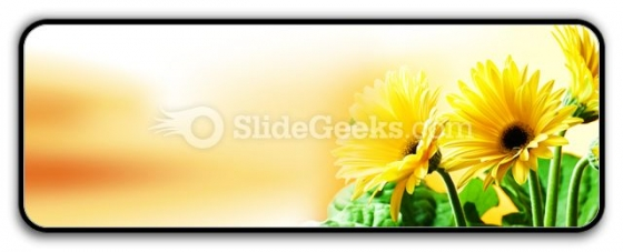 Yellow Daises PowerPoint Icon R