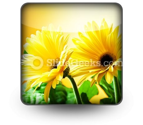 yellow_daises_powerpoint_icon_s