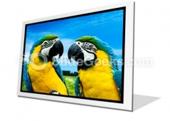 Parrots In Love PowerPoint Icon F